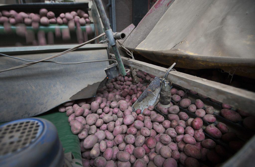 Maatschap Claassen streeft met precisielandbouw naar een hogere pootgoedopbrengst en een gelijkmatige sortering.