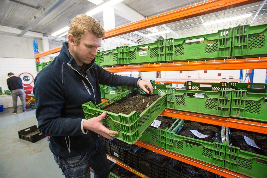 Jan Jaap Roseboom, specialist precisielandbouw bij Van Iperen, kijkt naar het aantal stengels op de knollen van Peter van der Poel.