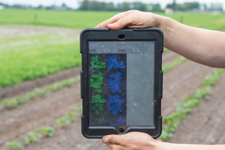 Op de bijbehorende tablet is per rij te zien wat de camera's zien (links) en hoe het algoritme deze waarnemingen vertaald naar aardbeien planten. Grote onkruiden worden ook als plant gezien.