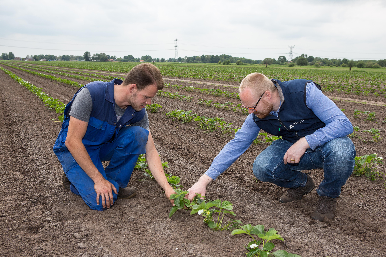 Marcel Smid (links) van Huetink en Johan Booij, WUR-expert en vanuit NPPL begeleider van Huetink, beoordelen samen het resultaat van het intrarij schoffelen.