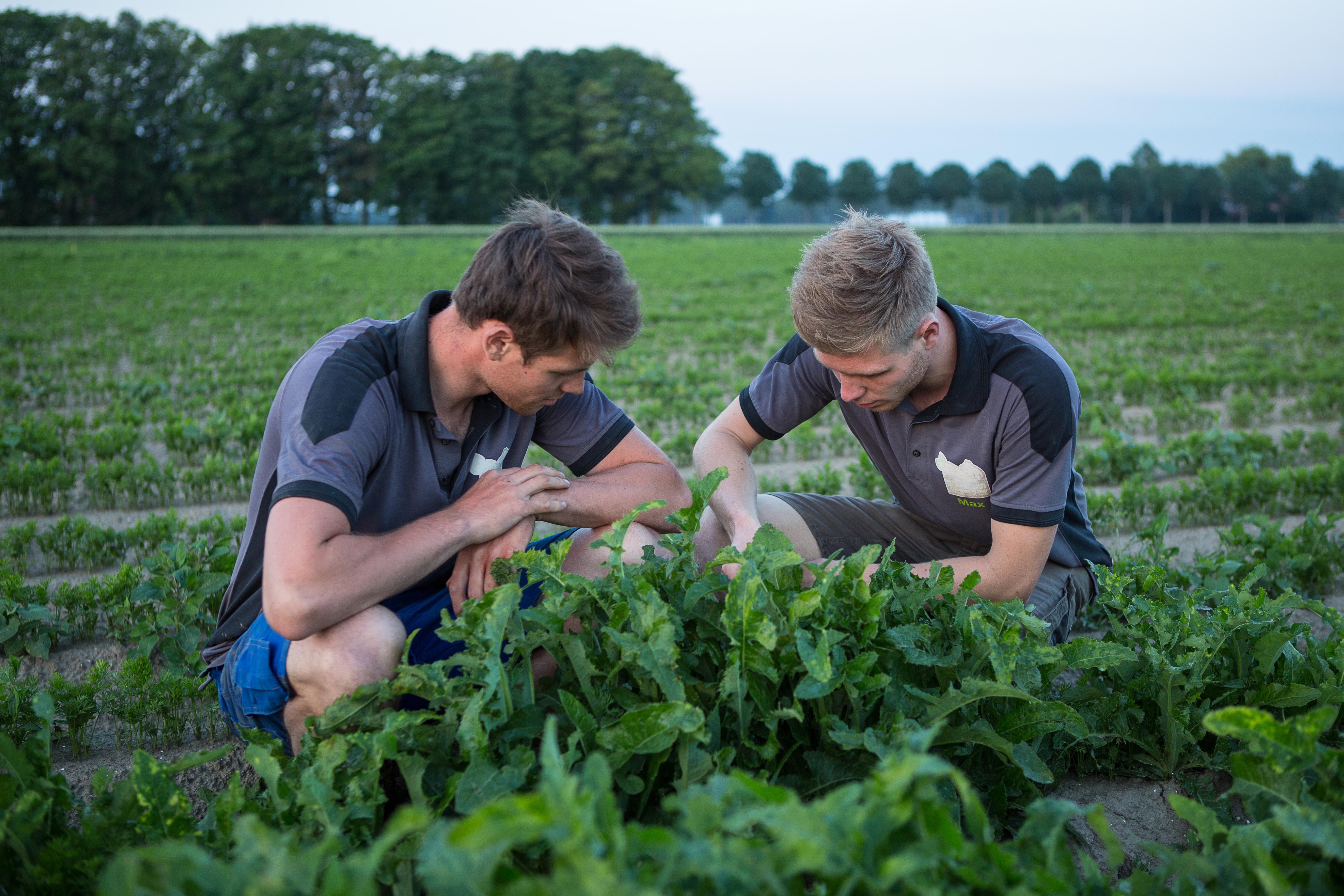 408150 Bestrijding van distels in de wortelen met precisie-spuiten bij akkerbouwbedrijf Sturm in Ens. Foto: Max en Gijs bekijken het spuitresultaat